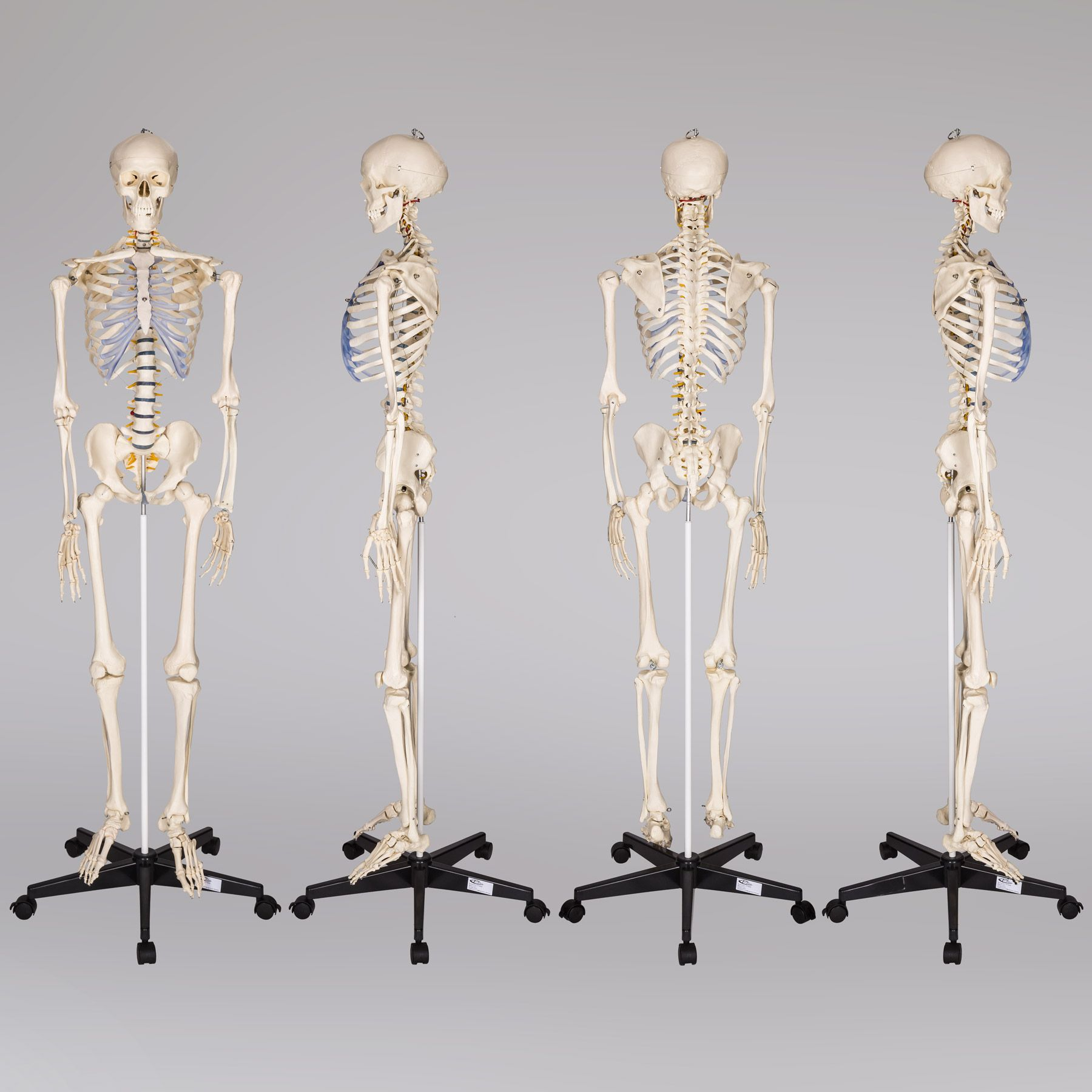 ukkitchen imprimante Squelette Veste 3X-Large Noir 1